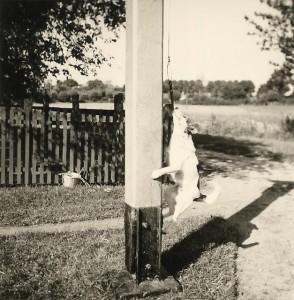 Fährhund Flocki (1959)