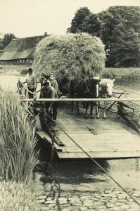 Pferdewagen auf der Fähre  (ca. Mitte der 1950-iger Jahre)